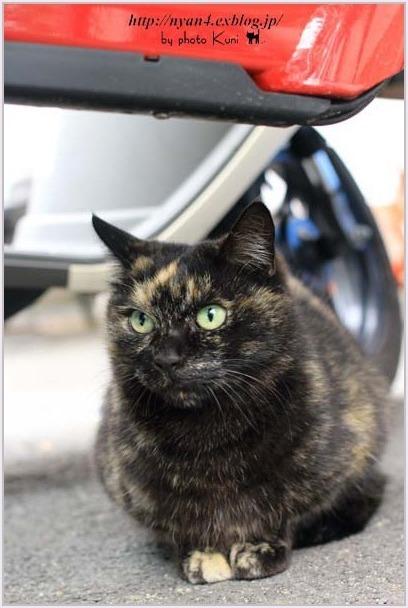 サビ猫の魅力(外で出会ったサビ猫さん)_f0166234_00084467.jpg