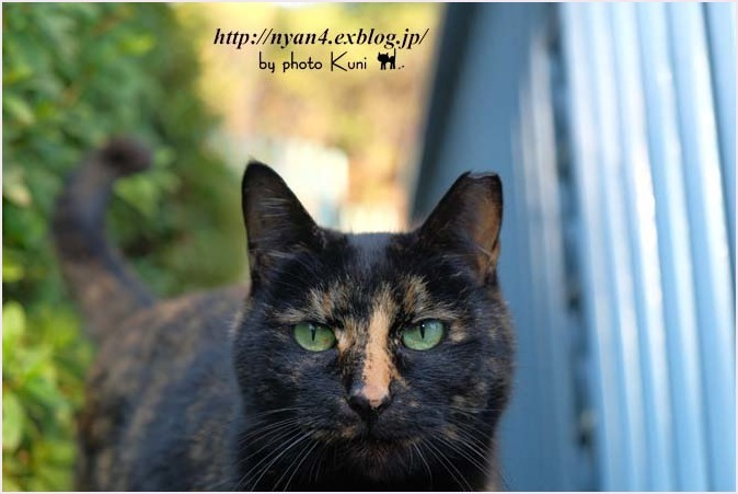 サビ猫の魅力(外で出会ったサビ猫さん)_f0166234_00143587.jpg