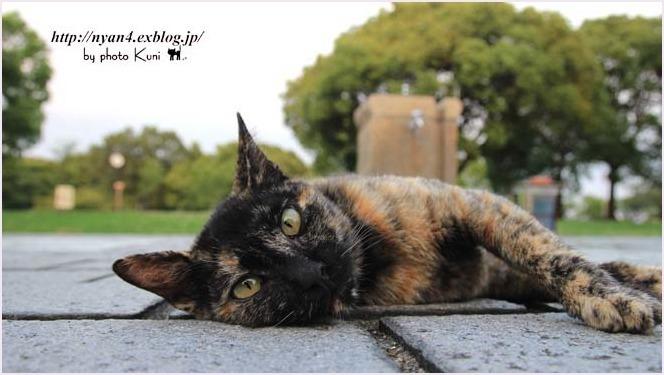サビ猫の魅力(外で出会ったサビ猫さん)_f0166234_00151801.jpg