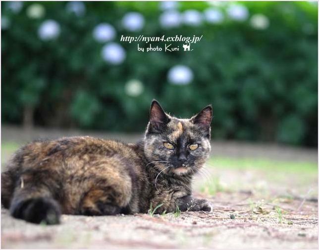 サビ猫の魅力(外で出会ったサビ猫さん)_f0166234_00164737.jpg