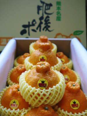 究極の柑橘『せとか』 令和2年の出荷スタート!収穫の様子を現地取材!(番外編)商品ラインナップ紹介!_a0254656_17170354.jpg