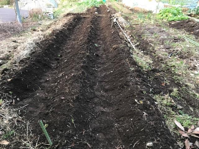 薪ストーブの灰をまぶしてジャガイモ植え付け2・19_c0014967_12204854.jpg