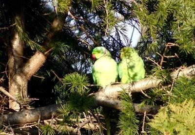 早春の鳥たち_d0244370_07223798.jpg