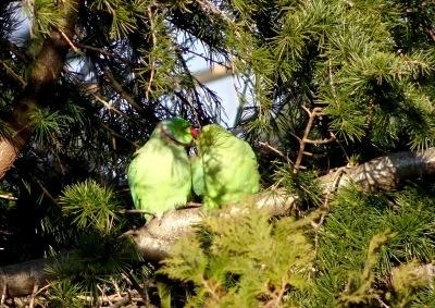 早春の鳥たち_d0244370_07224089.jpg