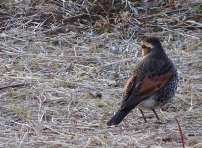 早春の鳥たち_d0244370_07224596.jpg