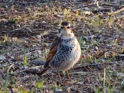 早春の鳥たち_d0244370_07225176.jpg