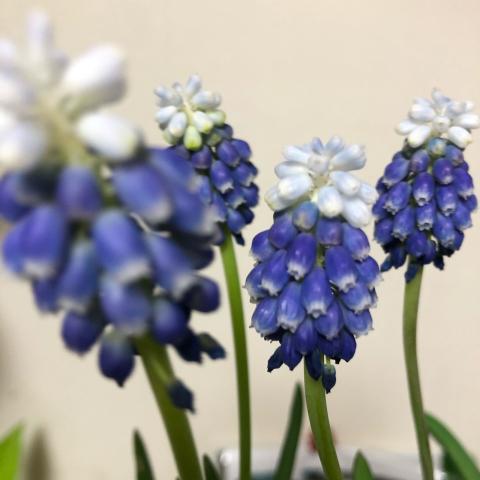 春色_d0233891_17492608.jpg