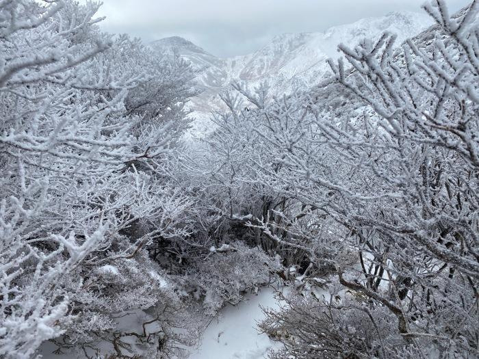 休みがあったら山登りin久住冬〜三股山_f0232994_14360282.jpg