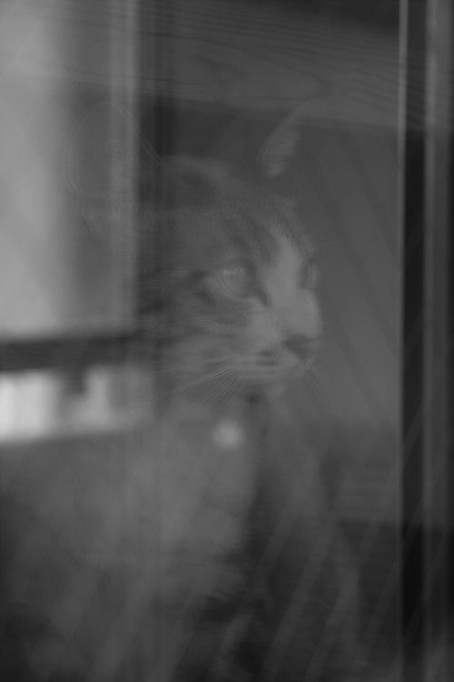 鏡に映った心の声_a0333195_21494318.jpg