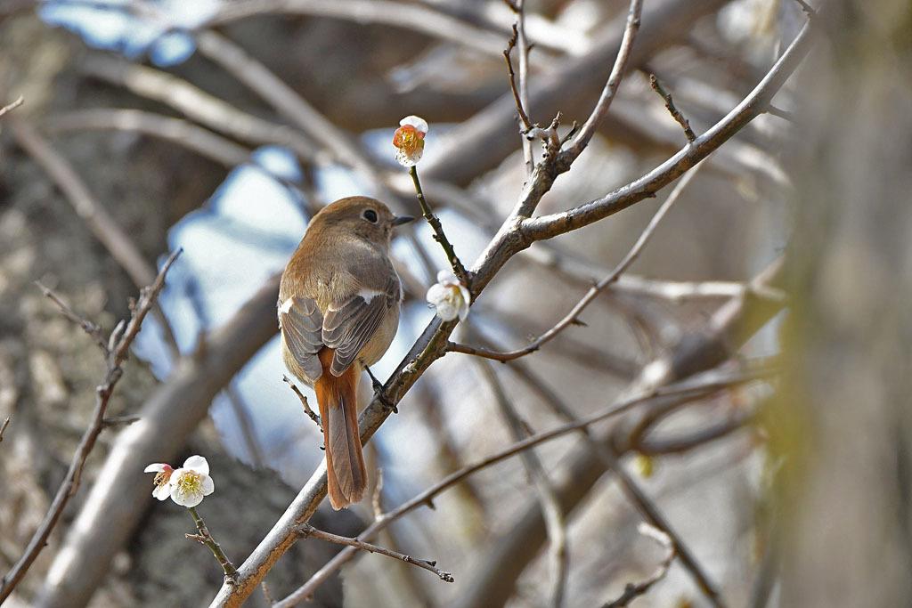 梅林の鳥達_b0024798_15320809.jpg