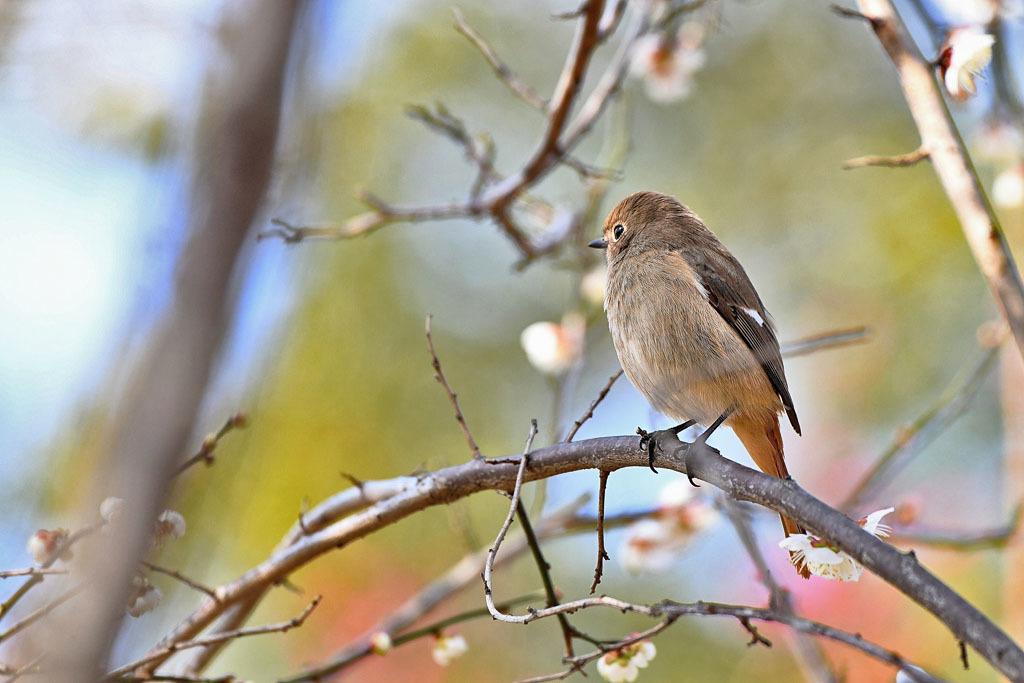 梅林の鳥達_b0024798_15322802.jpg