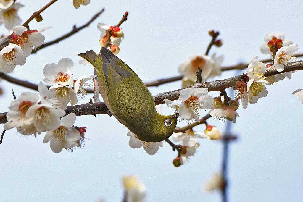 梅林の鳥達_b0024798_15333963.jpg