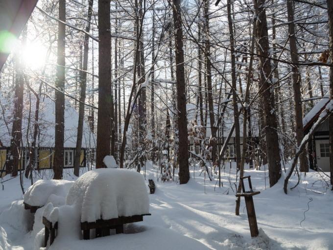 今季最大の積雪量に・・結局、冬に降る雪の量は同じ?_f0276498_14361265.jpg