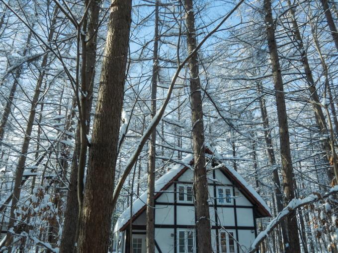 今季最大の積雪量に・・結局、冬に降る雪の量は同じ?_f0276498_14362447.jpg