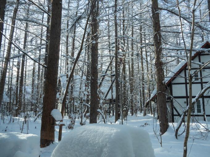 今季最大の積雪量に・・結局、冬に降る雪の量は同じ?_f0276498_14363476.jpg