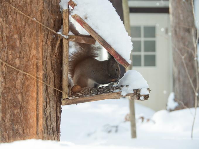 今季最大の積雪量に・・結局、冬に降る雪の量は同じ?_f0276498_14370442.jpg
