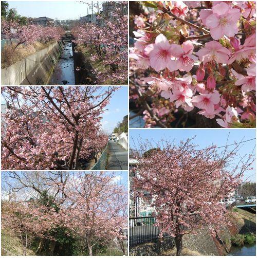 2月21日(金) 久しぶりの川沿い散歩_d0048312_19442053.jpg