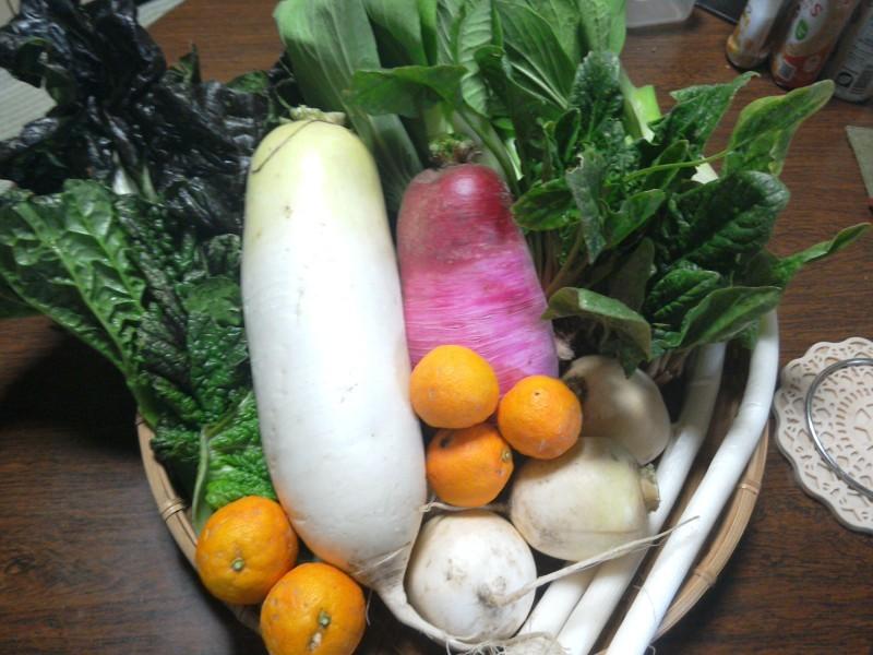 無農薬野菜 大野英子_f0371014_07331532.jpg