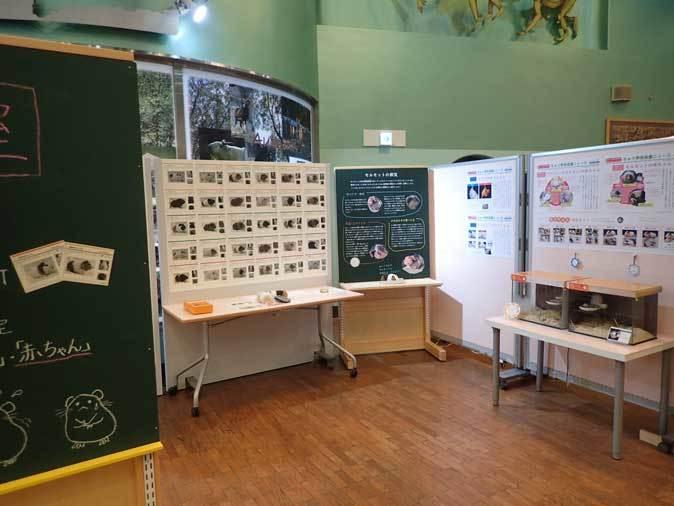 多摩動物公園・2020干支企画展「ちゅうげっ歯類展」その1_b0355317_22290544.jpg