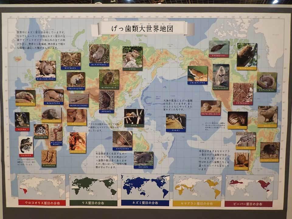 多摩動物公園・2020干支企画展「ちゅうげっ歯類展」その1_b0355317_22320613.jpg