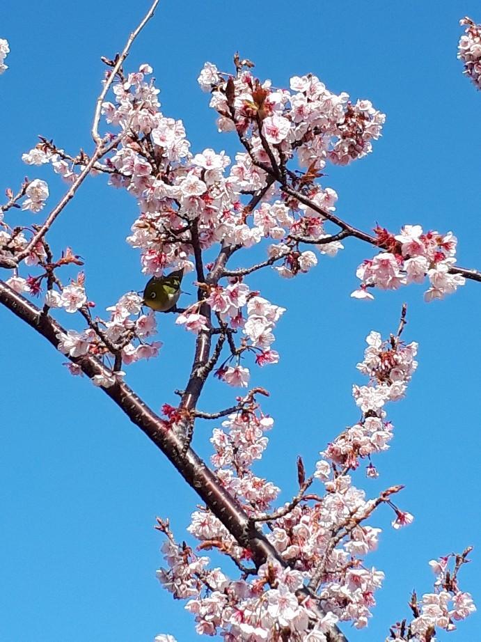 春の伊豆へその4・ニューアカオ ハーブ&ローズガーデン_c0226331_18010868.jpg