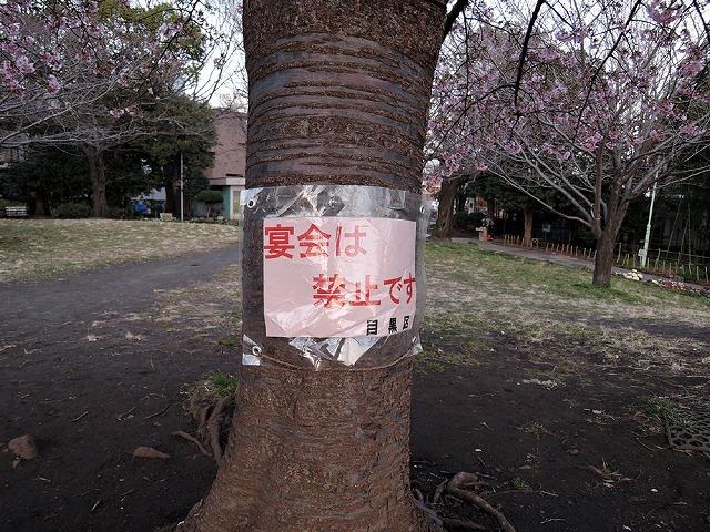 散歩屋で桜_c0062832_13380723.jpg