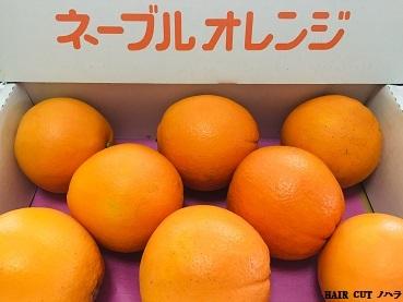 献上ネーブルオレンジ_e0145332_13272874.jpg