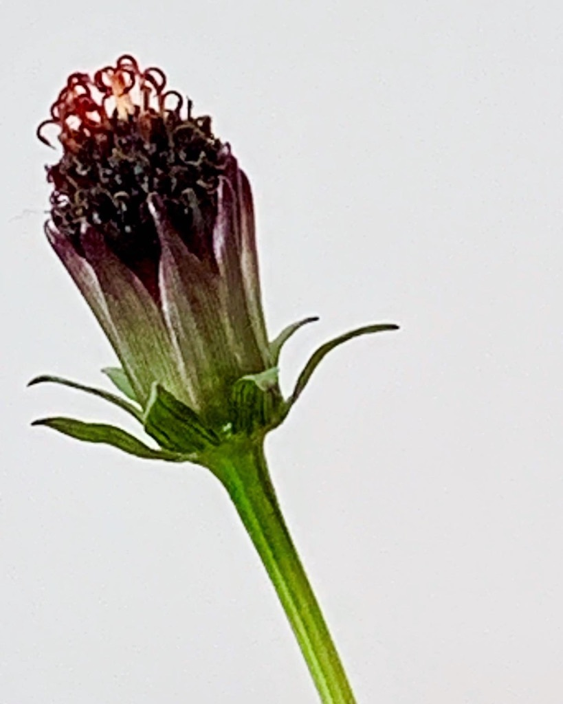 花も其々のペースで。。。_e0243332_16164467.jpg