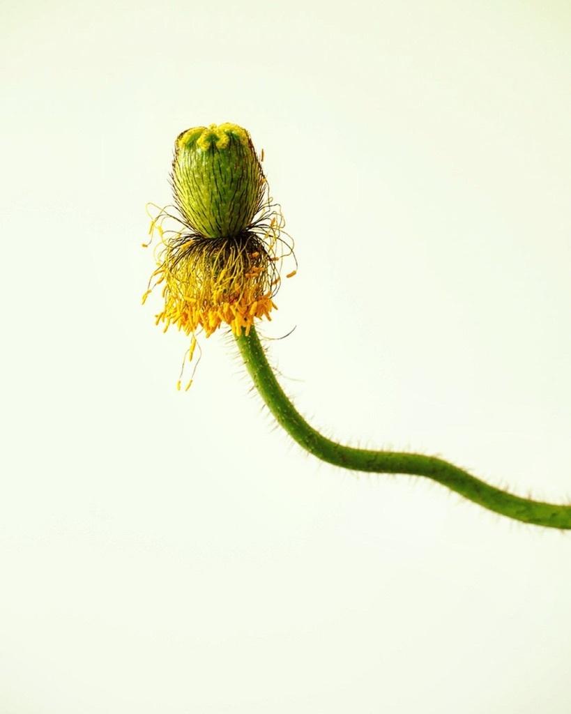 花も其々のペースで。。。_e0243332_16164884.jpg