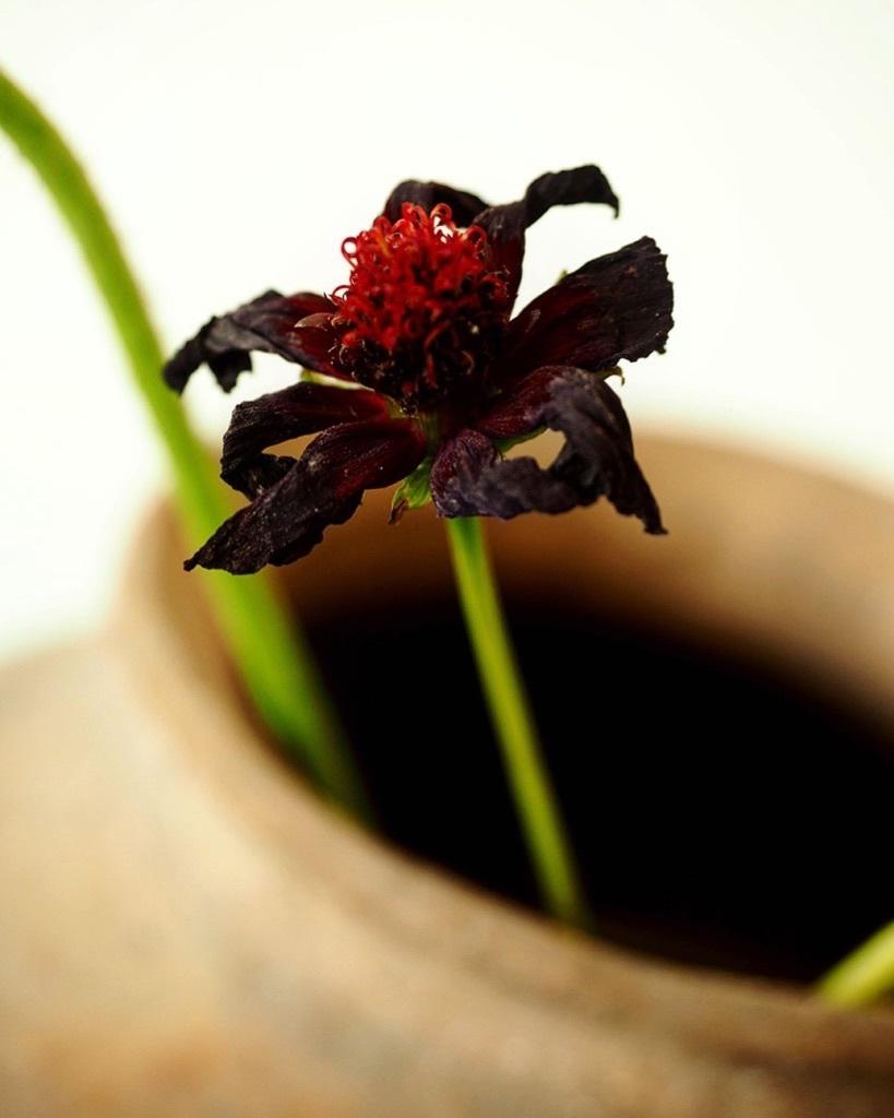 花も其々のペースで。。。_e0243332_16165189.jpg