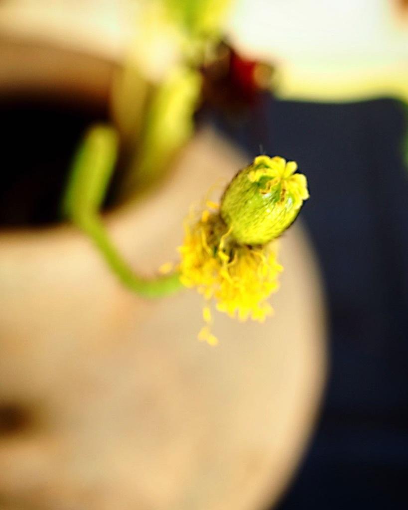 花も其々のペースで。。。_e0243332_16165834.jpg