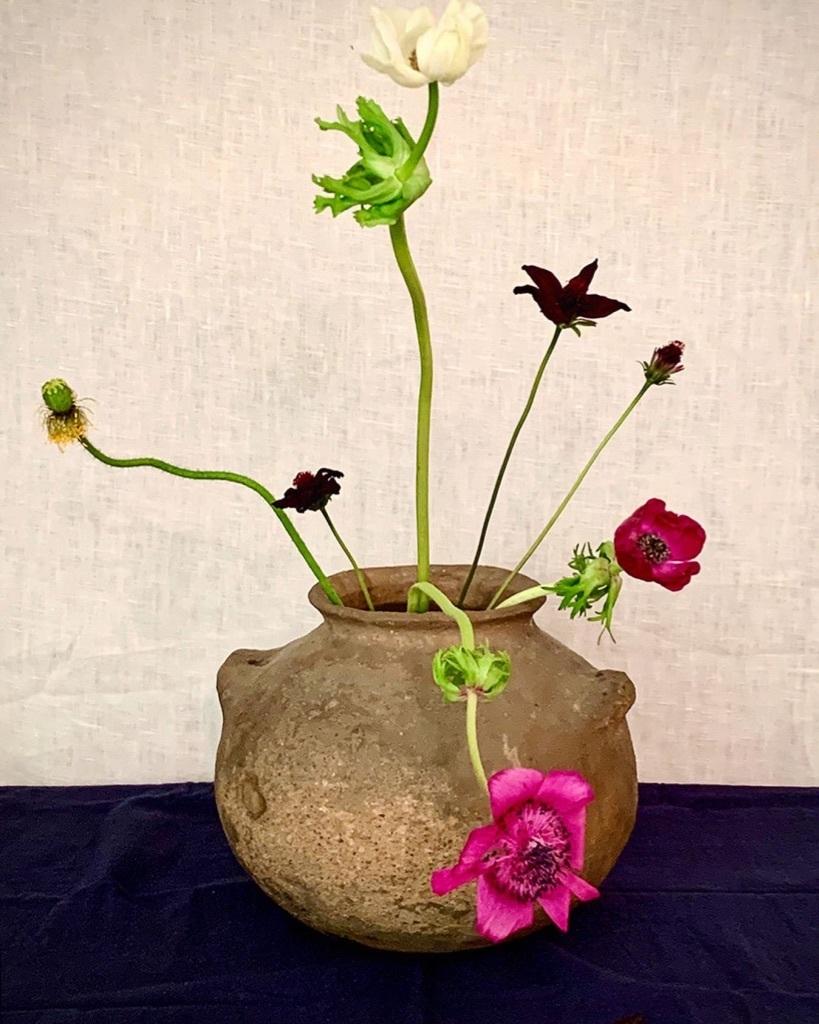 花も其々のペースで。。。_e0243332_16170186.jpg