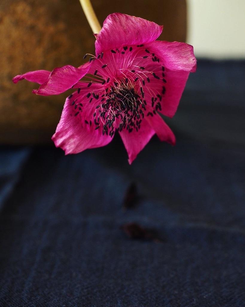 花も其々のペースで。。。_e0243332_16172303.jpg