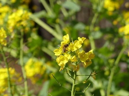 春の日差し。ネコヤナギ開花。_a0123836_16422601.jpg