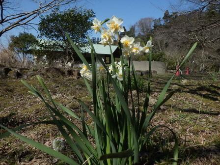 春の日差し。ネコヤナギ開花。_a0123836_16422755.jpg