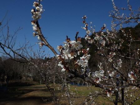 春の日差し。ネコヤナギ開花。_a0123836_16422791.jpg