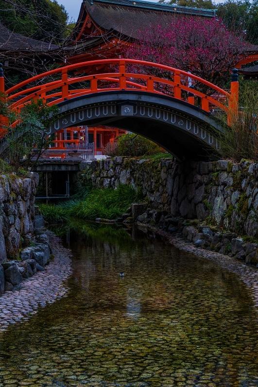 下鴨神社の梅_e0363038_10474367.jpg