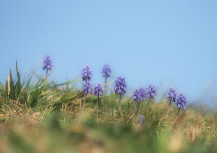 春です ヒクイナ Ⅰ_d0290240_16102561.jpg