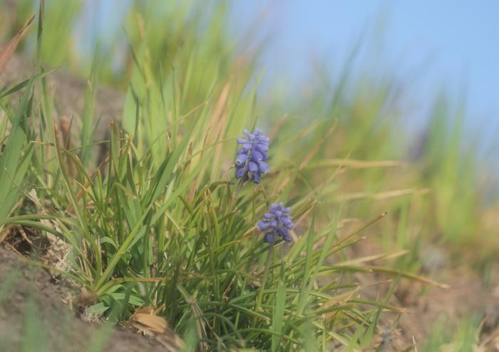 春です ヒクイナ Ⅰ_d0290240_16103372.jpg