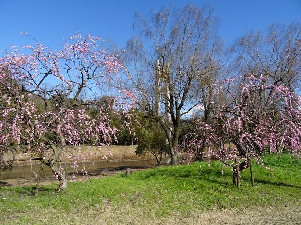 山田池公園の枝垂れ梅といろいろな花_b0299042_20091648.jpg
