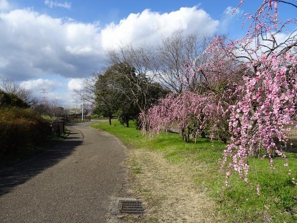 山田池公園の枝垂れ梅といろいろな花_b0299042_20093350.jpg