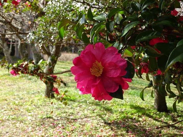 山田池公園の枝垂れ梅といろいろな花_b0299042_20093876.jpg