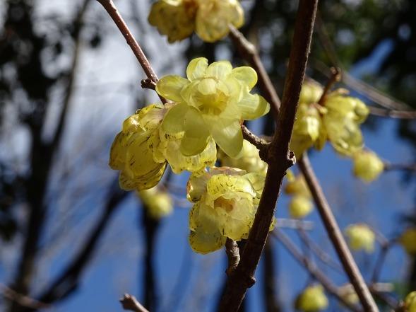 山田池公園の枝垂れ梅といろいろな花_b0299042_20094306.jpg