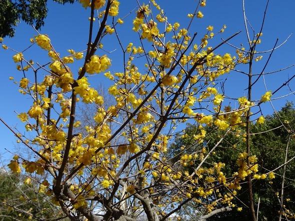 山田池公園の枝垂れ梅といろいろな花_b0299042_20094904.jpg