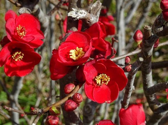 山田池公園の枝垂れ梅といろいろな花_b0299042_20095937.jpg