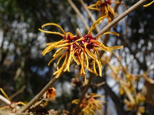 山田池公園の枝垂れ梅といろいろな花_b0299042_20100598.jpg