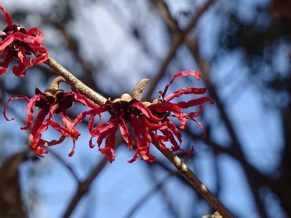 山田池公園の枝垂れ梅といろいろな花_b0299042_20101076.jpg
