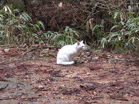 再び音羽鉱山探索と白猫様【奈良県】2/15_d0387443_14200879.jpg