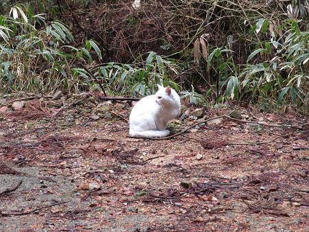 再び音羽鉱山探索と白猫様【奈良県】2/15_d0387443_14200985.jpg
