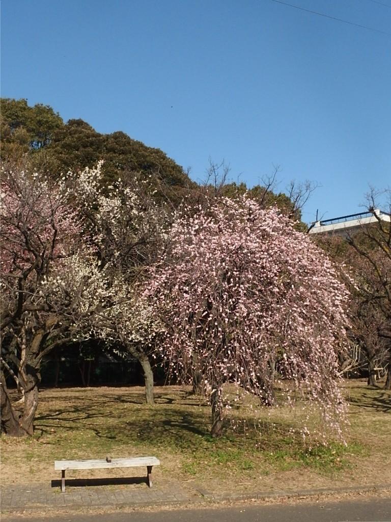 春の展覧会開催中_d0079147_16211874.jpg